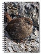 Winter Wren Dsb188 Spiral Notebook