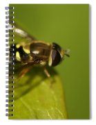Hoverfly On A Leaf Spiral Notebook