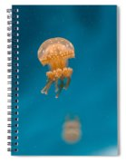 Hovering Spotted Jelly 1 Spiral Notebook