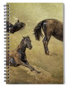 How A Black Horse Turns Brown - Pryor Mustangs Spiral Notebook