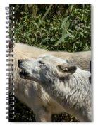 Howlin Artic Wolves Spiral Notebook