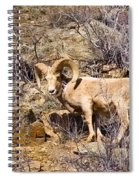 Huge Bighorn Spiral Notebook
