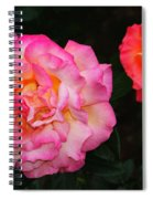 Huge Pink And White Rose...   # Spiral Notebook