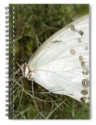 Huge White Morpho Butterfly Spiral Notebook