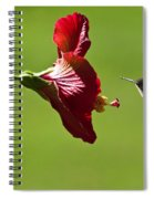Hummer At The Hibiscus Spiral Notebook