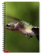 Look Hummingbird Eyelashes Spiral Notebook