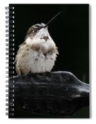 Hummer In The Rain II Spiral Notebook