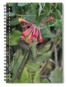 Humming Bird At Honey Suckle Vine Spiral Notebook