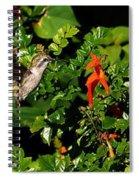 Humming Bird Honeysuckle Spiral Notebook