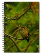 Humming Birds Perched  Spiral Notebook