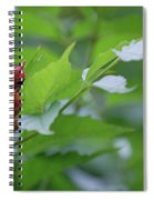 Humming Buds By Jammer Spiral Notebook