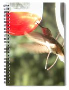 Hummingbird 1 Spiral Notebook