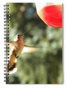 Hummingbird 2 Spiral Notebook