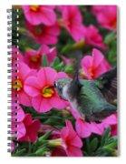 Hummingbird 3219 Spiral Notebook