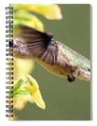 Hummingbird 3725 Spiral Notebook