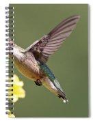 Hummingbird 3731 Spiral Notebook