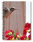 Hummingbird 4533 Spiral Notebook