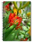 Hummingbird Among The Lucifer Spiral Notebook