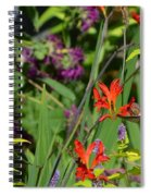 Hummingbird And Crocosmia Lucifer Spiral Notebook