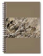 Hummingbird Spiral Notebook