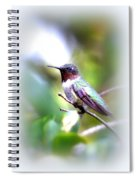 Hummingbird - Beautiful Spiral Notebook