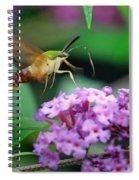Hummingbird Clearwing Moth Spiral Notebook