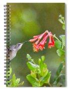 Hummingbird Dives In  Spiral Notebook
