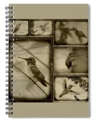 Hummingbird Family Portraits Spiral Notebook