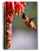 Hummingbird Feast  Spiral Notebook
