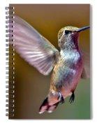 Hummingbird Frolic Spiral Notebook