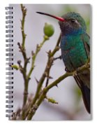 Hummingbird II Spiral Notebook