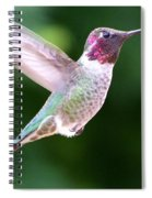 Hummingbird In Flight Spiral Notebook