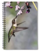 Hummingbird - Little Sipper Spiral Notebook