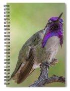 Hummingbird Male Costa Spiral Notebook