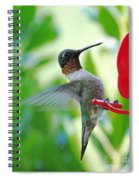 Hummingbird Male Ruby Throated  Spiral Notebook