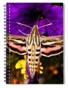 Hummingbird Moth   #8645 Spiral Notebook