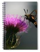 Hummingbird Moth II Spiral Notebook
