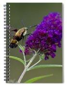 Hummingbird Moth Iv Spiral Notebook