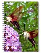 Hummingbird Moths Spiral Notebook