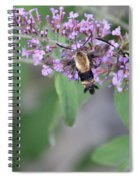 Hummingbird Moths Spiral Notebook