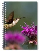 Hummingbird Moving Along Spiral Notebook