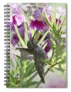Hummingbird On A Desert Willow Spiral Notebook