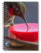 Hummingbird On Feeder Spiral Notebook