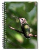 Hummingbird - Ruby-throated Hummingbird - Detail Spiral Notebook