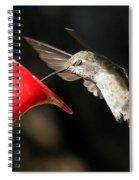 Hummingbird Sigh Spiral Notebook