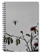 Hummingbird Silhouette I Spiral Notebook