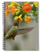 Hummingbird Sips Nectar Spiral Notebook
