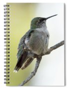 Hummingbird Sitting On A Branch Spiral Notebook