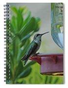 Hummingbird Still Life Spiral Notebook