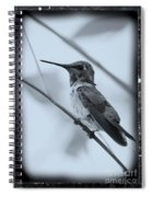 Hummingbird With Old-fashioned Frame 1 Spiral Notebook